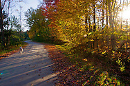 Fall road at sunset, backroad of Vermont with Golden doodle dog