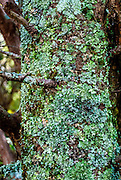 Deep in the thick rhododendron underbrush along a section of the AT in southwest Virginia, I found this tree with a diverse collection of lichen and moss.