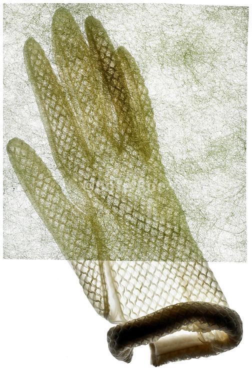 white translucent gloves