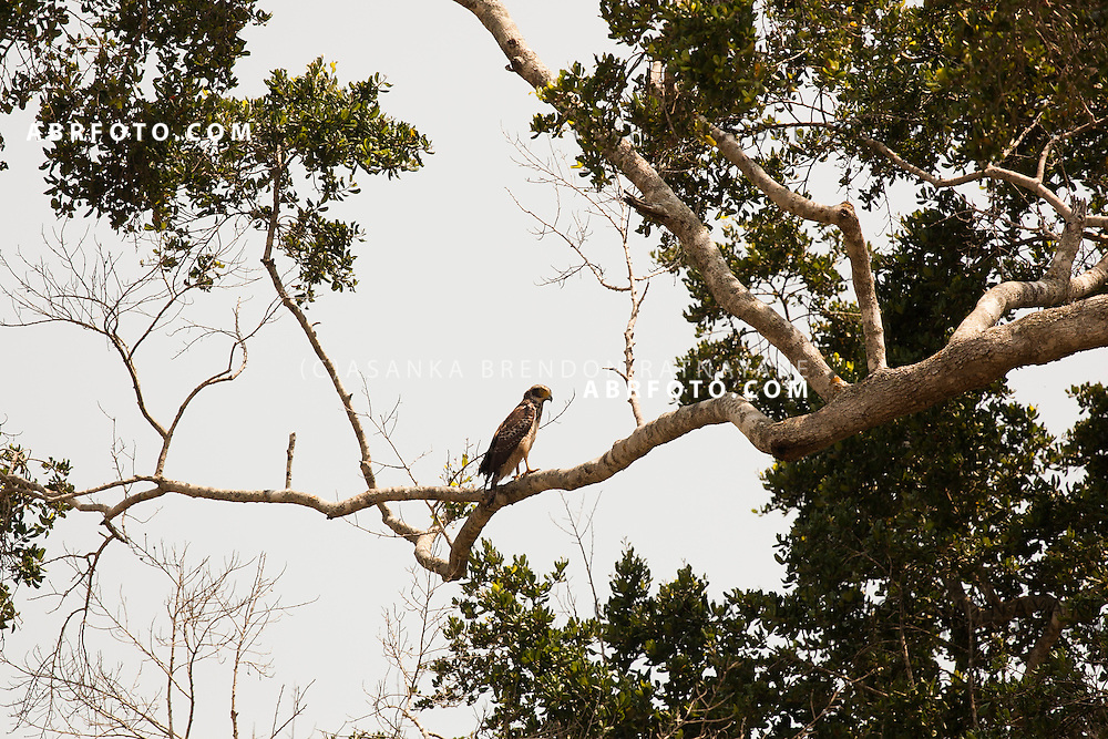 Eagle on a TreeUdawalawe National Park lies on the boundary of Sabaragamuwa and Uva Provinces, in Sri Lanka. The national park was created to provide a sanctuary for wild animals