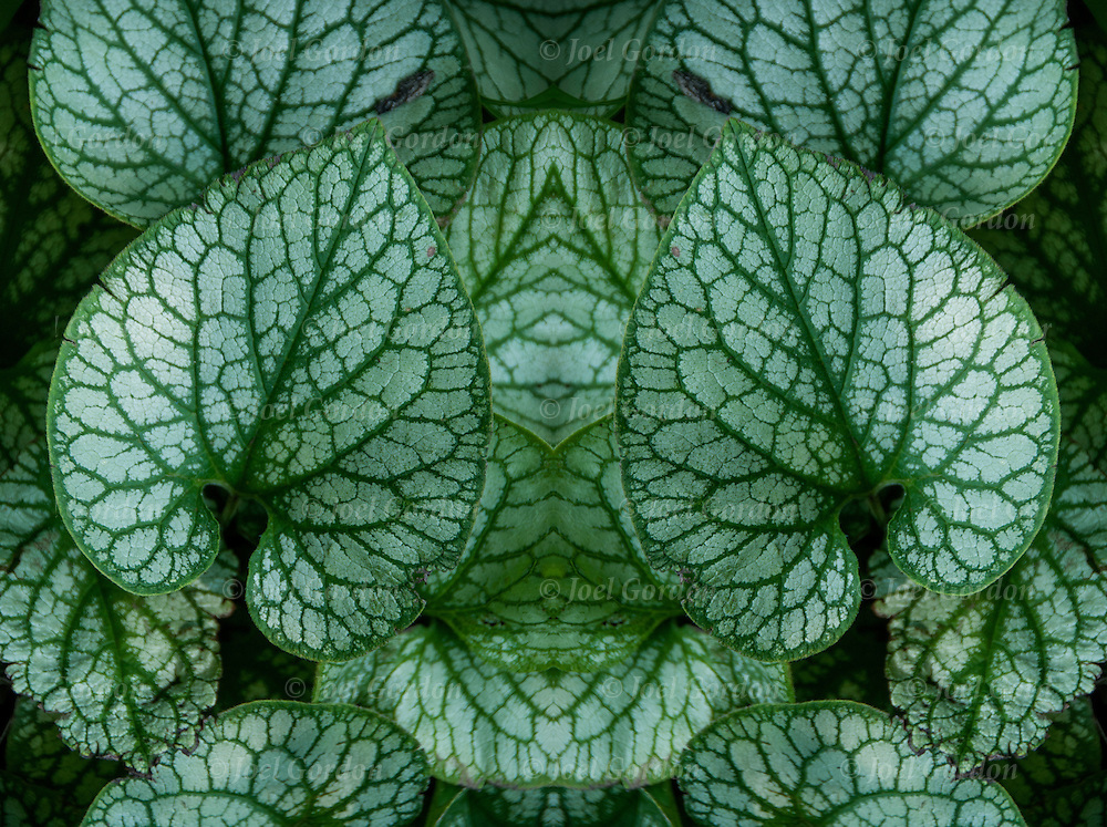 Plant foliage  flipped and mirrored to create new image