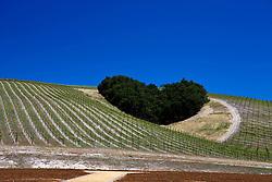 Heart Hill, Niner Wine Estates winery, Paso Robles, California, United States of America