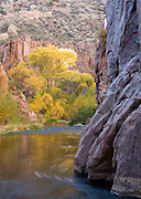 Cottonwoods in autumn color along Aravaipa Creek, Aravaipa Canyon Wilderness.