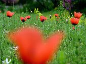 Botanicsher Garten