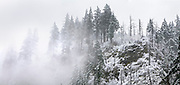 Fresh snow and mist in Columbia River Gorge National Scenic Area, Oregon.