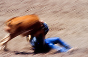 11 MAY 2002 - BUCKEYE, ARIZONA, USA: Steer wrestling at the Arizona West PRCA Rodeo in Buckeye, AZ, May 11, 2002. It was the first year for the Arizona West PRCA Rodeo..PHOTO BY JACK KURTZ