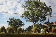 Topiary in Mantua, Pinar del Rio, Cuba.
