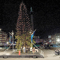 LONDON, ENGLAND - DECEMBER 03:  The Norwegian Christmas tree lights are turned on in Trafalgar Square on December 3,  2009 in London. It is the 63rd year that Norway has gifted the city of London with a Norwegian Christmas tree. on December 3, 2009 in London, England.  (Photo by Marco Secchi/Getty Images)