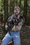 Tasmanian Devil<br /> Sarcophilus harrisii<br /> Wade Anthony, Managing Director of Devils at Cradle, holding devil after health check, soon to be released into the wild<br /> Devils at Cradle, Cradle Mountain National Park, Tasmania, Australia<br /> *Captive- captive breeding program