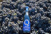 Quilhurst harvest 2016, Chehalem AVA, Willamette Valley, Oregon