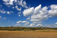 23/08/13 - CAUSSE MEJEAN - LOZERE - FRANCE - Culture de triticale sur le Causse Mejean - Photo Jerome CHABANNE