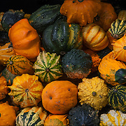 Halloween colorful Cucurbitas (gourds) on sale in food market.
