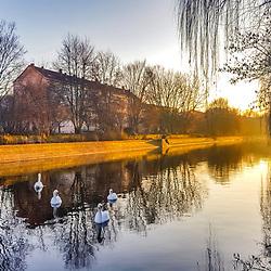 """""""Cisne-brando em  Paisagem Urbana (Paisagem) fotografado na Alemanha, na Unição Européia - Europa. Registro feito em 2016.<br /> ⠀<br /> <br /> ENGLISH: Mute Swan Urban landscape photographed in Germany, in European Union - Europe. Picture made in 2016."""""""