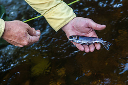 A man holding a small brook trout in Cold Stream in Maine's Northern Forest. West Forks.