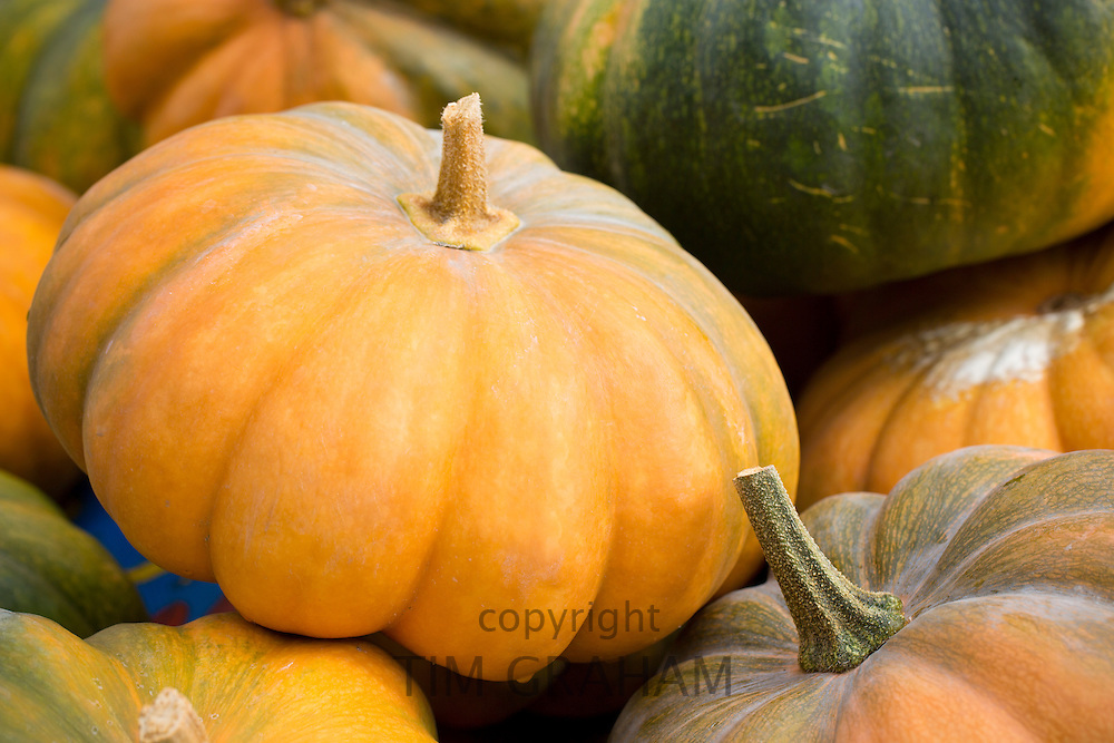Pumpkin, Musquee de Provence, and squash for sale at roadside stall in Pays de La Loire, France