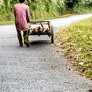 A Lao man gathers firewood on his cart on a steep road in northern Laos.