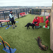 WASHINGTON, DC - OCT07:  Charity Struthers (right) holds her dog Benny while she chats with Candace Willis, who is visiting her daughter and granddog Brody, at the on the roof of the Park Chelsea Apartments, October 7, 2016, in Washington, DC. As new apartment buildings continue sprouting around downtown DC, developers know that a large percentage of renters in the city have dogs and make their choices of buildings based largely on pet-friendliness. So they go out of their way to be welcoming to dogs.  (Photo by Evelyn Hockstein/For The Washington Post)