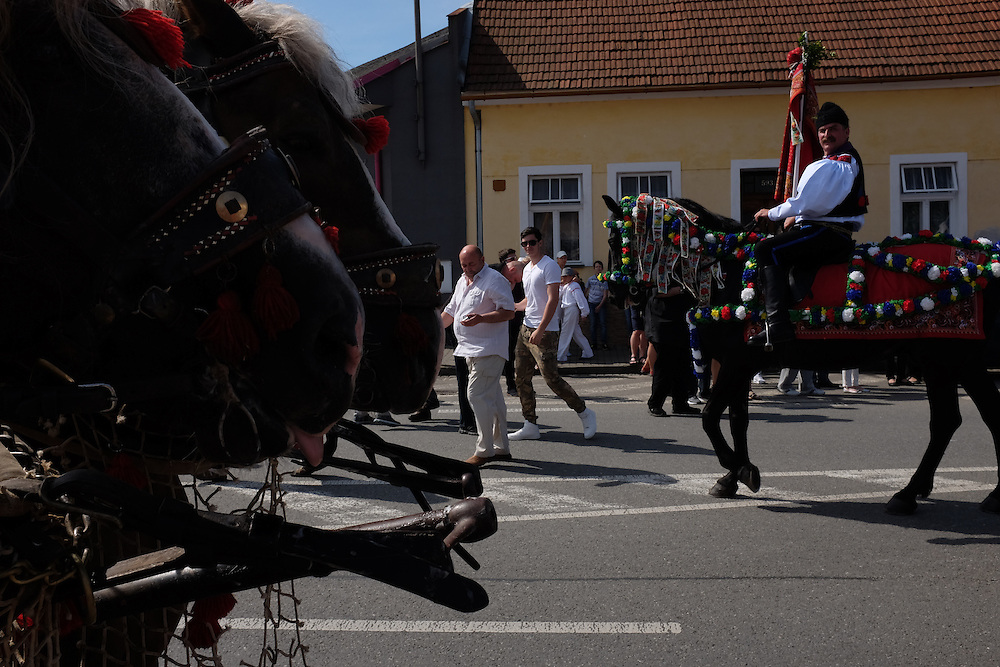 Horses and rider, in Kunovice, Czech Republic, at the Jizda Kralu, Ride of the Kings.