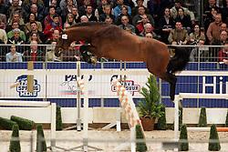 383 - Waldeck<br /> KWPN Hengstenkeuring 2006<br /> Photo © Hippo Foto