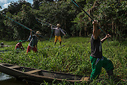 Maraã, Brazil - October 29, 2014: Fishermen aim their harpoon while fishing pirarucu at a floating vegetation area of Lago do Macaco, or Monkey's Lake, in Maraã, western Amazon region. CREDIT: Photo by Mauricio Lima for The New York Times