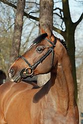 Candillo Z<br /> Stoeterij Zangersheide Lanaken 2006<br /> Photo © Hippo Foto