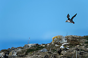 Bird photography from Elliston NL Canada