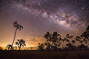Big Cypress Stars Johnbobcarlos johnbob Everglades