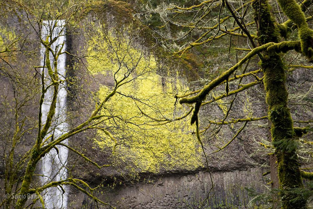 La Tourel Falls in Oregon in Spring