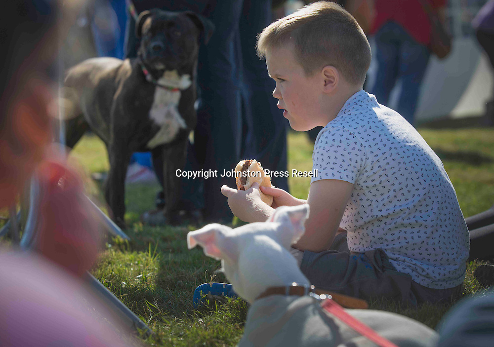 Edinburgh Cat and Dog Home open day. <br /> 6th September 2015<br /> <br /> picture by Alex Hewitt<br /> alex.hewitt@gmail.com<br /> 07789 871 540
