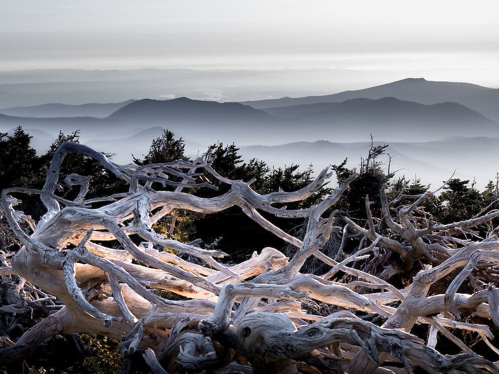 Captured while the sun was setting through low broken clouds, this carcass of whitebark pine was illuminated by a shaft of evening light and appears to be glowing from within.<br />