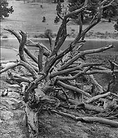 Dead tree at Lily lake in Rocky Mountain National Park. Composite of two images taken with a Nikon D300 camera and 80-400 mm VR lens (ISO 200, 80 mm, f/5.6, 1/320 sec). Composite created using Auto Pano Giga. B&W conversion using Capture One Pro.