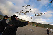 Seagulls being fed by visitors.