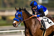 ARCADIA, CA - DECEMBER 30: Midnight Crossing #2 drives to the wire with Brice Blanc aboard to win the Robert Frankel Stakes at Santa Anita Park on December 30, 2017 in Arcadia, California. (Photo by Alex Evers/Eclipse Sportswire/Getty Images)