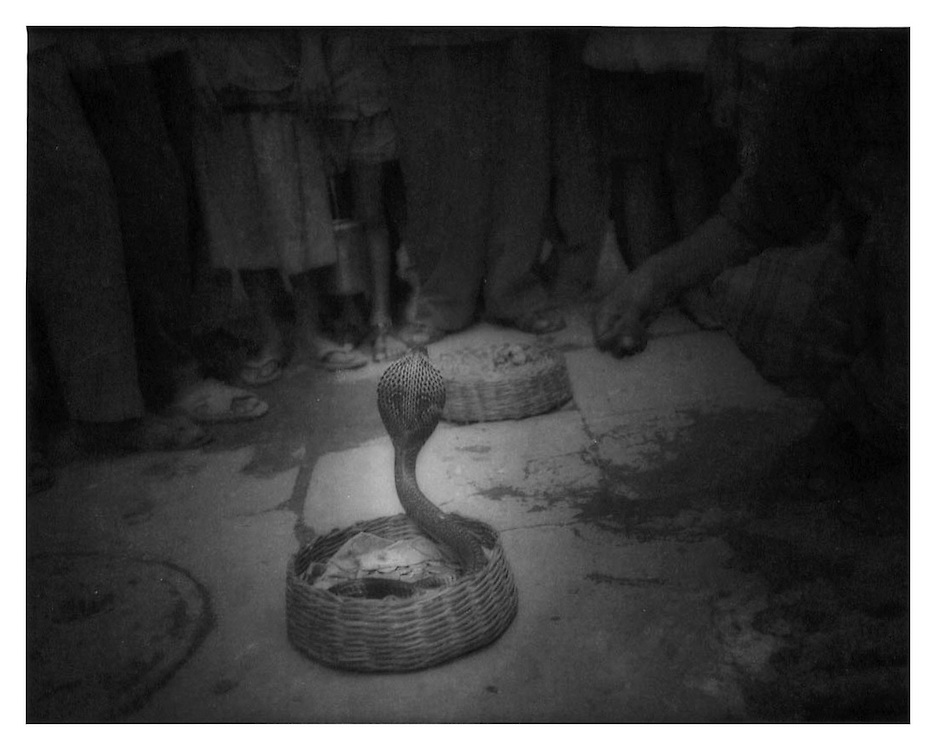 Charming a Cobra in a Varanasi alleyway.