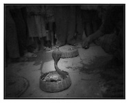 Charming a Cobra in a Varanasi alleyway.