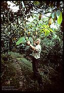 07: MISCELLANY COCOA FARM