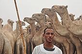 Camel Market - Egypt