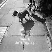 "Looking down from a person's height, we see two Pitbull dogs standing quietly on a south London street pavement. The two animals seem docile but are attached to leads held by an unknown owner. AT the dogs' feet in a stencilled sign that Lambeth, the local council has left at many locations of its streets where dog owners neglect to collect their pets' mess. Their idea was to paint the words ""Bag it. Bin it"" to help educate this unhygienic practice. Britain's Dangerous Dogs Act bans the breeding and sale or exchange of four kinds of dog - pit bull terriers, Japanese Tosas, the Dogo Argentinos, and the Fila Brasileiros. Under the act, a dog classed as being ""dangerously out of control in a public place"" can be destroyed. The owner can be fined and imprisoned for up to six months. If a dog injures someone, the owner can be jailed for up to two years."