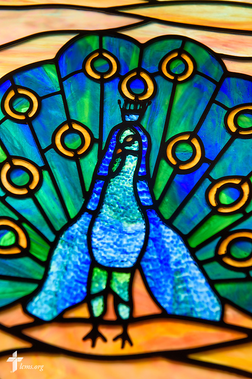Stained glass of a peacock, representing in ancient Christendom the resurrection of Jesus Christ, at Mount Olive Lutheran Church on Thursday, March 3, 2016, in Loveland, Colo. LCMS Communications/Erik M. Lunsford