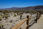 Joshua Tree National Park Desert Cactus Scenery