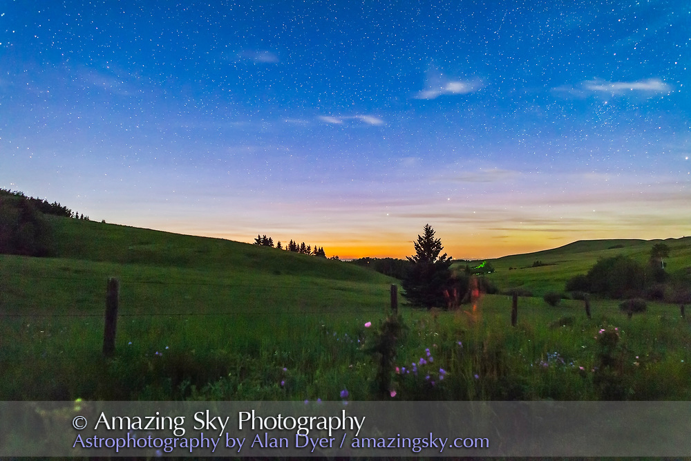 A starlit scene on the Reesor Ranch, Alberta, with pink Wild Roses and bluebells by the road with a starry sky behind in the twilight, July 16, 2013. This is one frame of a 300 frame time-lapse dolly sequence. This is 20 seconds at f/2.8 with the 24mm lens and Canon 5D MkII at ISO 3200. Capella is the bright star above the horizon.