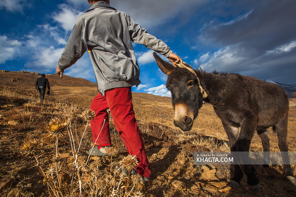A boy pulls his donkey to reach the road and ride him back to his village, Tashi Gang, a small village in the remote part of Spiti Valley. This is one of the favourite pass time of kids of the villages.