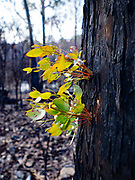 New growth after last summer's bush fire —