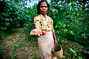 Magdalena Salsinha, has been picking coffee since she was 15. She is now 55 and she lives in Humboiii near Ermera. She is married and has 6 children. Photo by UNMIT/Martine Perret. 15 April 2011