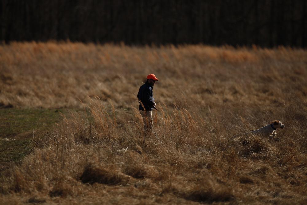 Upland hunting dog training