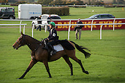 SARAH JANE TOWNEND, Side-Saddle Dash, Southern Spinal Injuries Trust charity Day. Wincanotn. 25 October 2015.