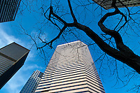 looking up at bare tree branches and skyscrapers from the street in downtown Seattle, Washington, USA.
