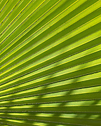 Palm leaf pattern, Tohono Chul Park, Tucson, Arizona