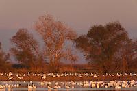 Winter Birds, Merced National Wildlife Refuge, California