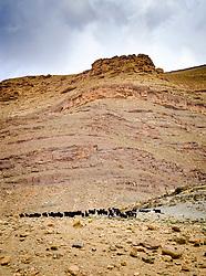 A herd of goats graze the hills beside the piste from Tamtetoucht to Msemrir, Morocco<br /> <br /> (c) Andrew Wilson   Edinburgh Elite media
